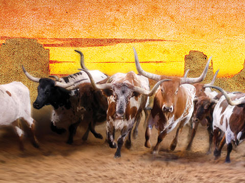 Longhorns Are Back For Dixie Stampede's 30th Season